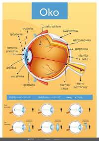Oko - Anatomia człowieka (złożony)