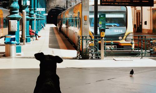 """Test ze znajomości lektury """"O psie, który jeździł koleją"""""""