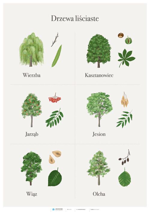 Drzewa liściaste cz. 1