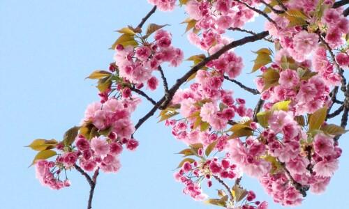 Wiosna – ach, to Ty!