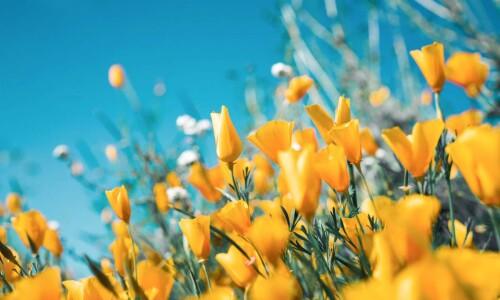 Wiosenny czas