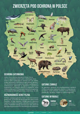 Zwierzęta pod ochroną w Polsce