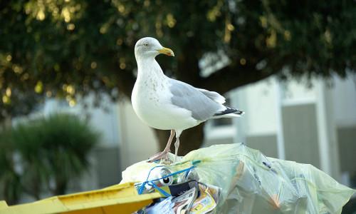 Śmieci zagrożeniem dla ptaków