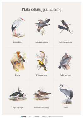 Ptaki odlatujące na zimę