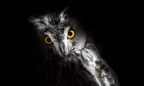 Co się kryje w ciemnościach?