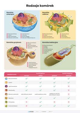 Rodzaje komórek