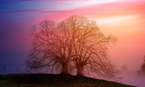 Magiczne drzewo. Olbrzym