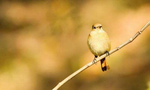 Na gałązce usiadł ptak…