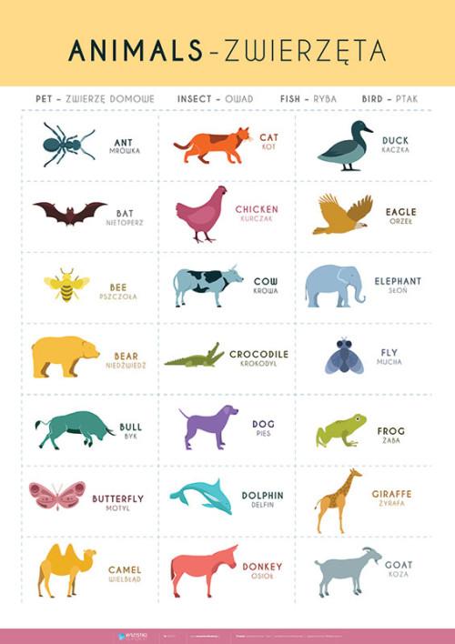 Angielski – słówka – zwierzęta – cz. 1