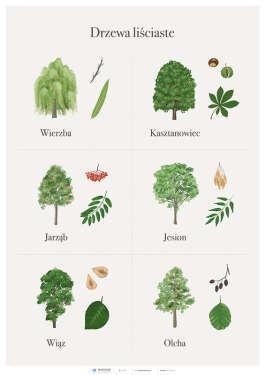 PAKIET: Drzewa liściaste i iglaste