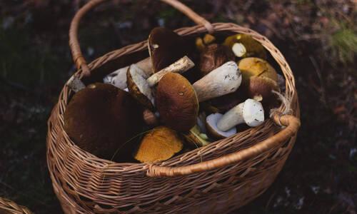 U grzybiarza w koszyku – mozaika papierowa