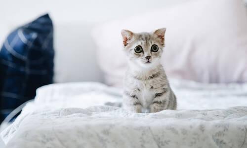 Aaa kotki dwa – dzisiaj mruczek swoje święto ma