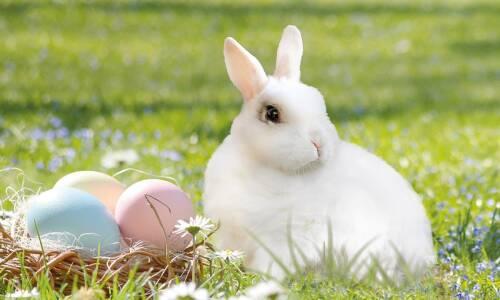 Wielkanocny koszyczek Agatki i Gacusia