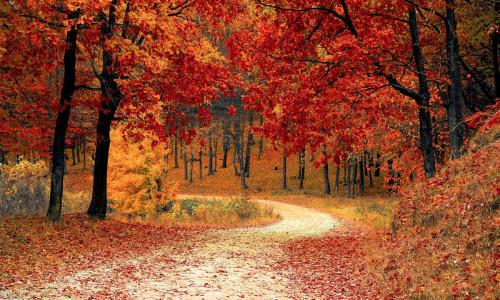 Jesienny spacer do lasu