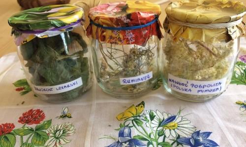 Zioła i kwiaty w medycynie ludowej
