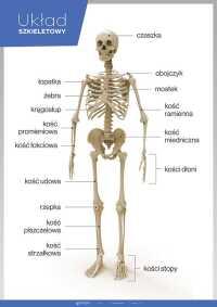 PAKIET: Anatomia człowieka