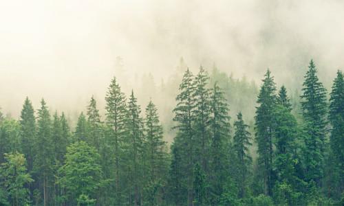 Las bliżej podróżników